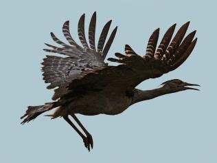 Kori take off