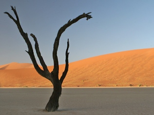 desert elements