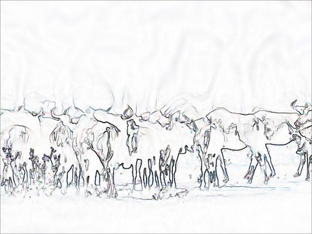 wildebeest 1