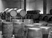 Maturation cellar