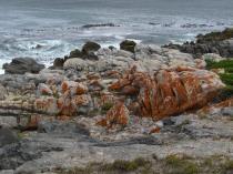 Lichen-covered rocks