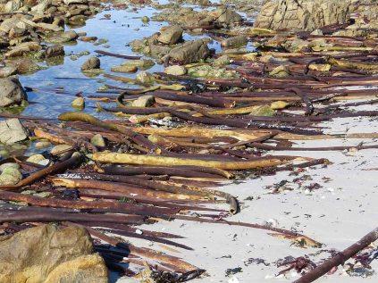 Symmetrical seaweed