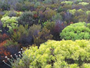 A section of colourful fynbos