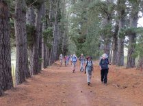 A pine avenue