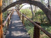 The river boardwalk