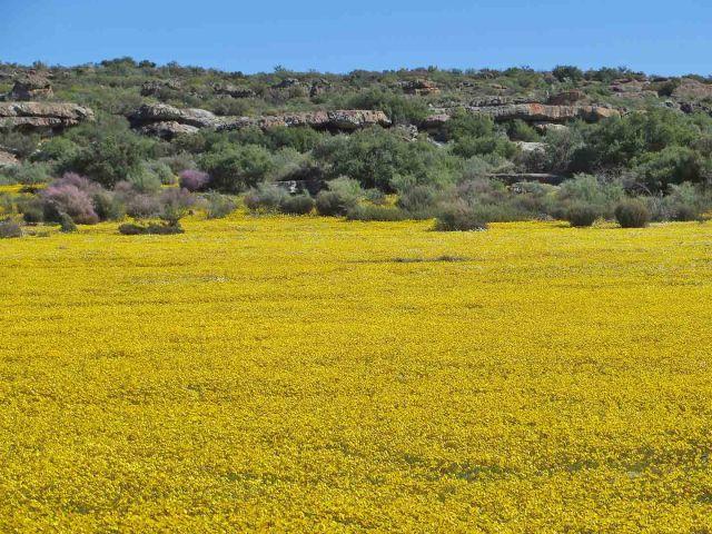 At Papkuilsfontein