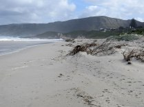 The beach, littered with vegetation