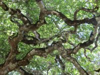 Contorted canopy