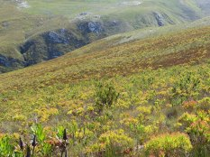 Splendid fynbos