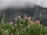 At Kirstenbosch