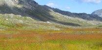 A field of Restios