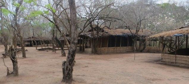 The camp at Gorongosa