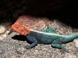 An awsome lizard