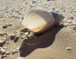 A Land Snail shell