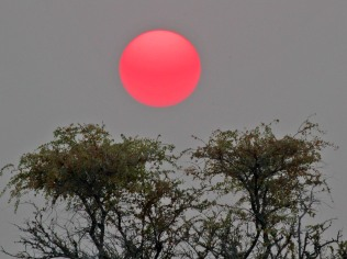 Sunset at Etosha