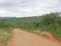 Green veld near Pretoriuskop