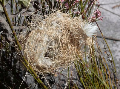 Bird's Nest with floral decoration