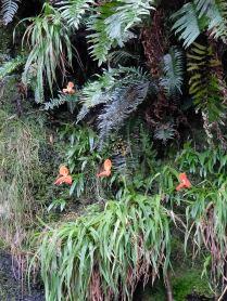 Amongst the ferns