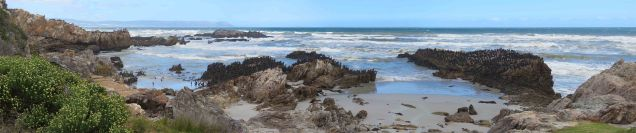 cormorants-at-platbank-for-blog
