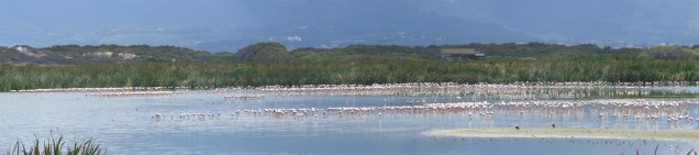 flamingos-and-waders