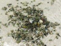 Hermit Crabs en masse