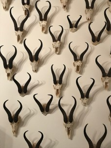 Springbok horns at The Drostdy