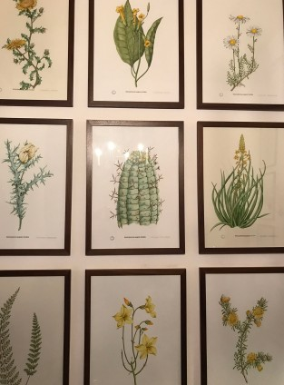 Botanical art at The Drostdy