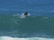 Surfing at Onrus Beach