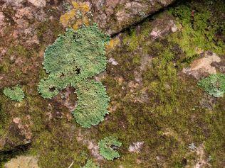 Moss and Lichen in Boekenhoutkloof