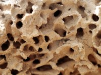 A section of a termite mound