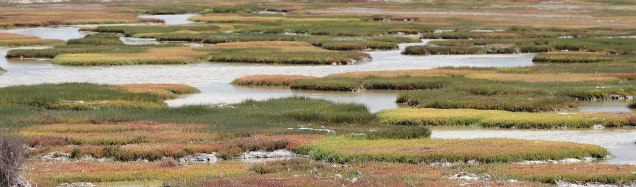 Marshes at Geelbek