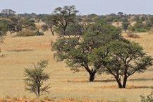 The savannah at Gharagab