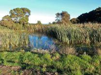 Part of the wetlands