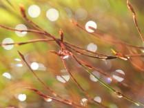 Dewdrops n the sun