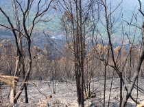 A burnt area along the Prince Alfred pass