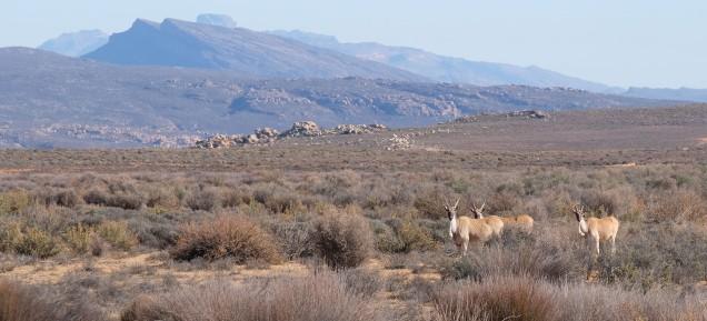 We met eland on our walk