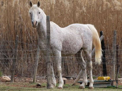 A brown speckled horse
