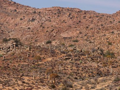 Quiver trees and rocky hillsides