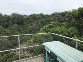 Above the canopy at Dhlinza Forest