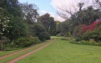 The Chase garden