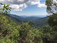 Magoebaskloof forest