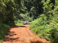 In the Magoebaskloof forest