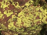 Lichen in the Waterberg