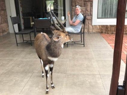 A visiting Nyala at Waterberg