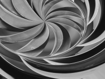 Palm Spiral